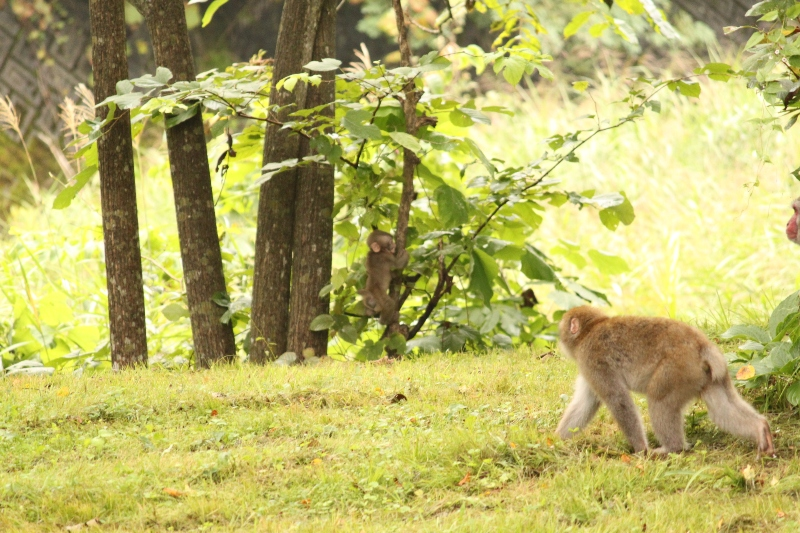 親子のサル発見!!すみれガーデンで見た動物たち。