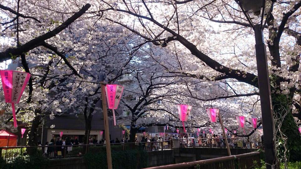 先々週の桜、中目黒の様子