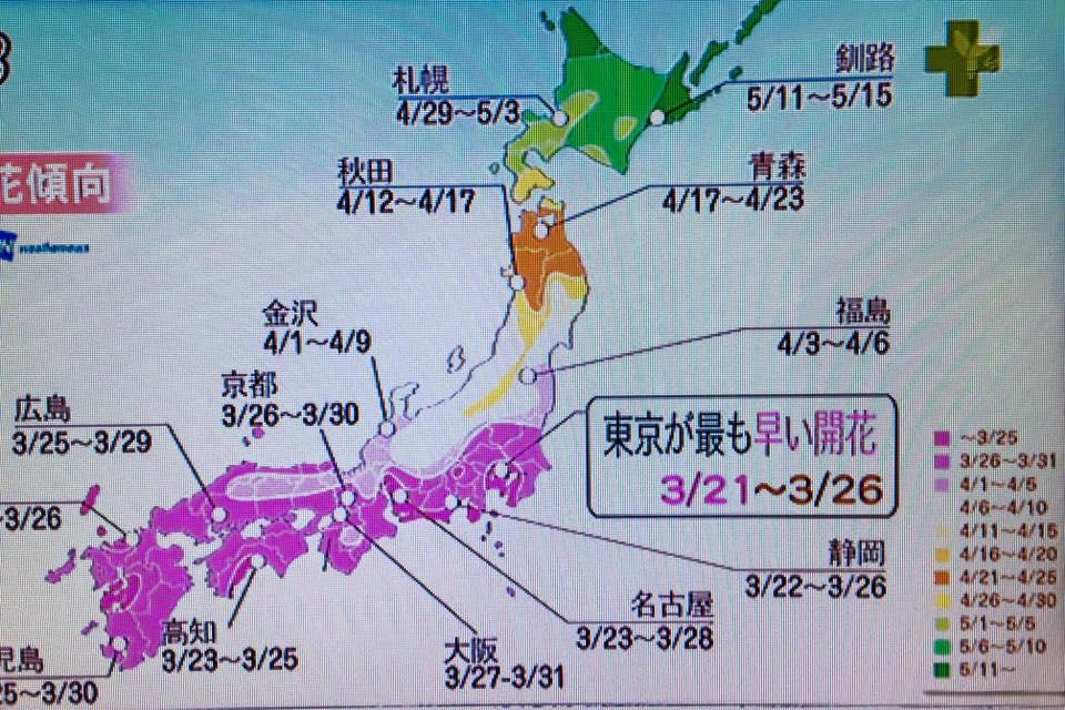 今朝のニュースの 桜の開花予測