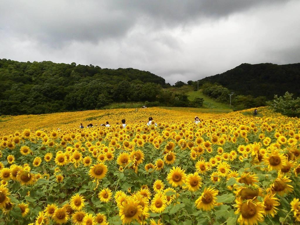 8月20日 三ノ倉高原M.Iさまの写真より