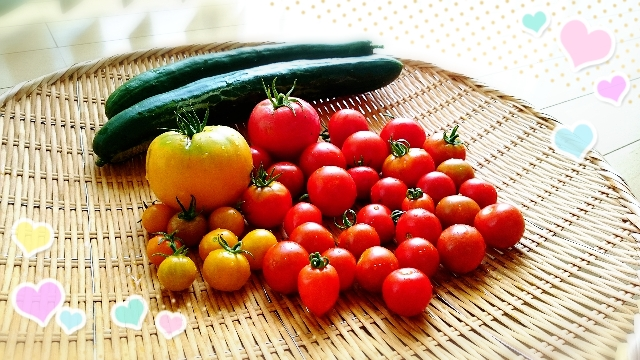 お宿で話題になった家庭菜園のトマトをみせてくれた