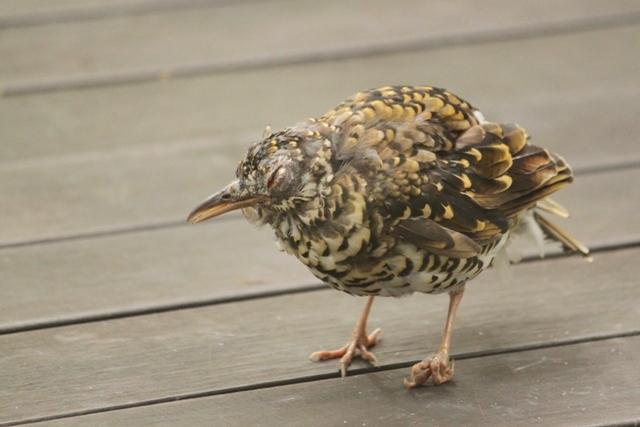 怪我していたのかな?まるで動かずじっとしている鳥。