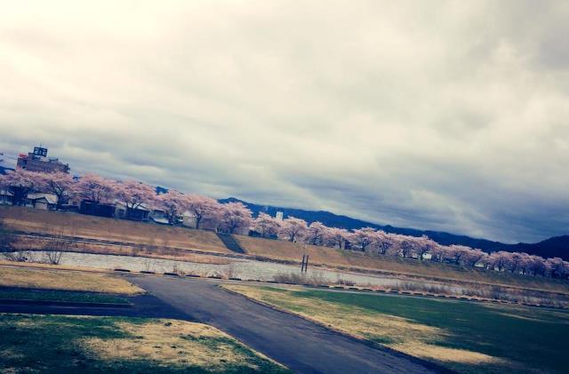城下の桜満開♪ー米沢市上杉城址と松川河川敷2015ー