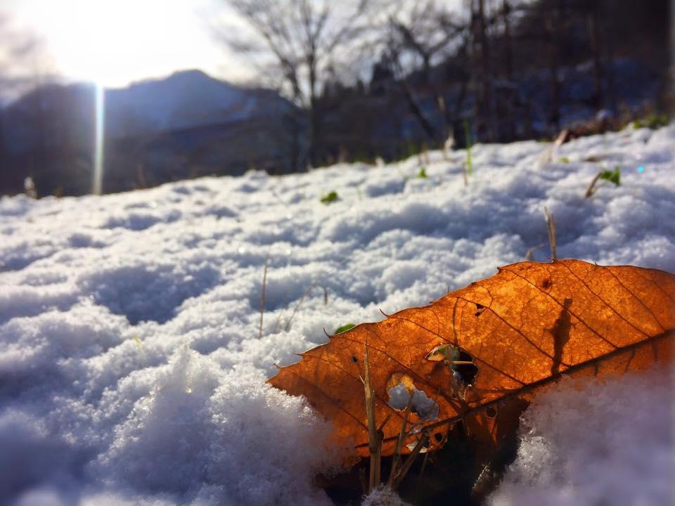 米沢は明日27日からの一週間は毎日雪が降る!?予定です。