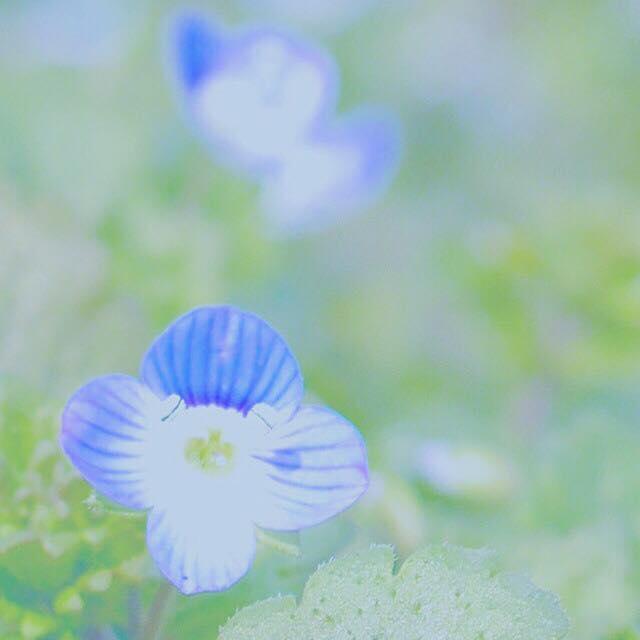 気になっていた花の名は「星の瞳」だった!-かえでさんの写真より-