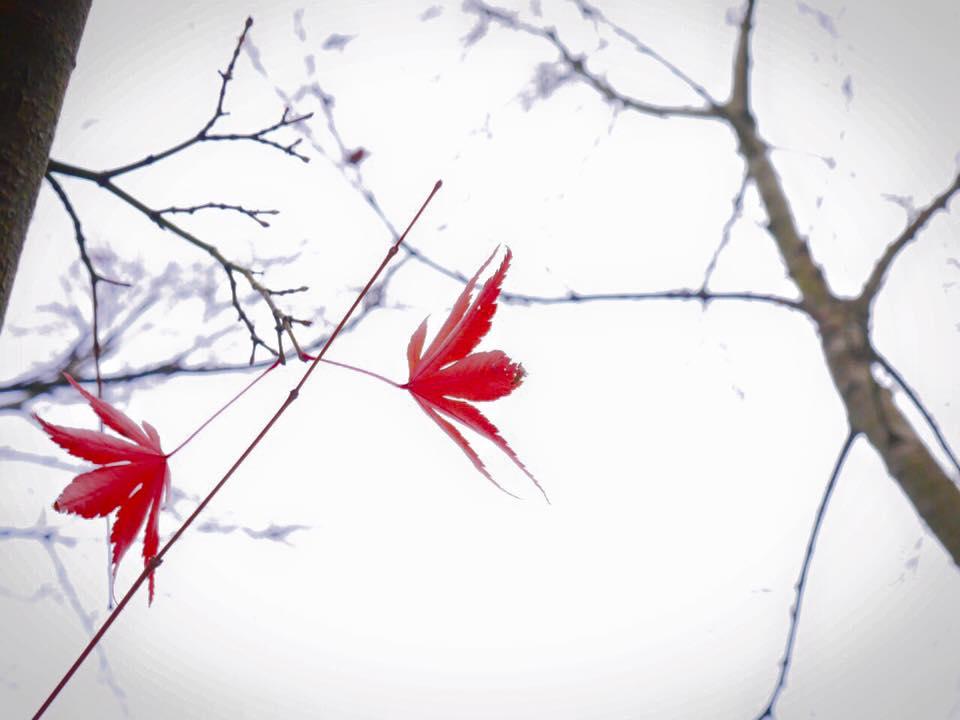 すみれの冬メニューはじまりました。すみれの冬がはじまりました♪