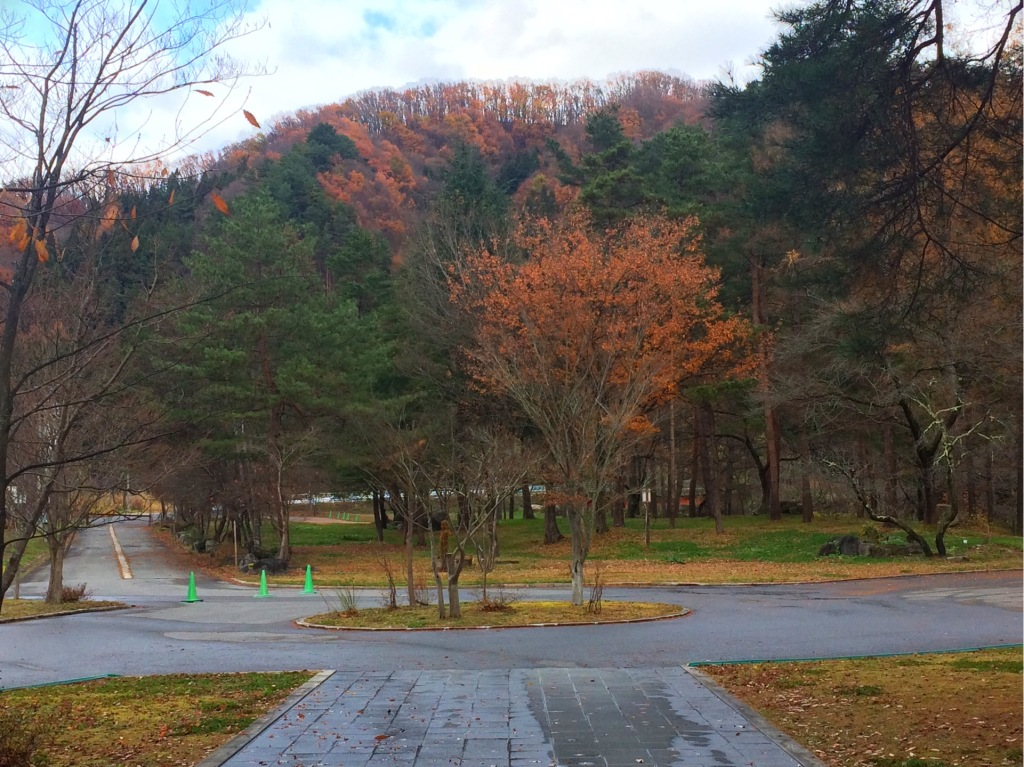 今日の玄関前の風景。すっかり初冬