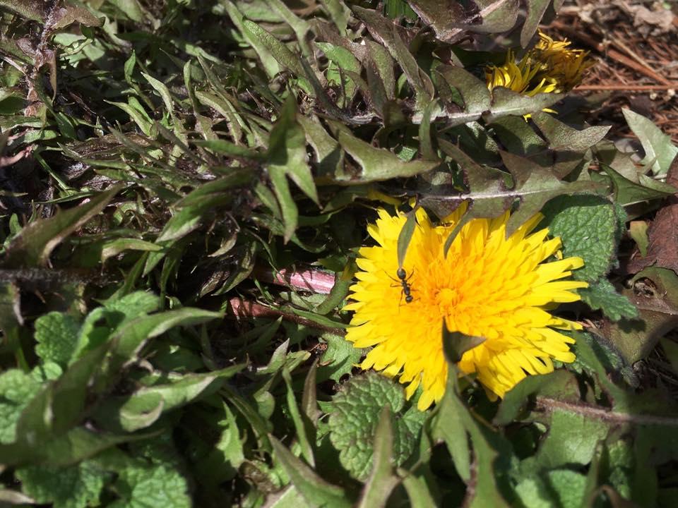 身近な春に、 あたりまえに季節が巡ってくることに 感謝ですね♪ー米沢の春ー