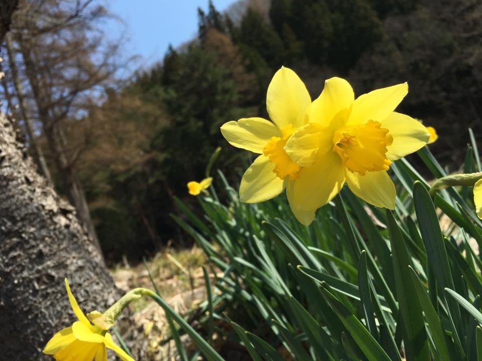 4月13日のお花見なら会津若松・鶴ヶ城が良いと思います♪
