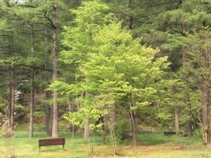 すみれのぶたコーナーと お誕生日の温泉旅行♪ー新緑の季節にー