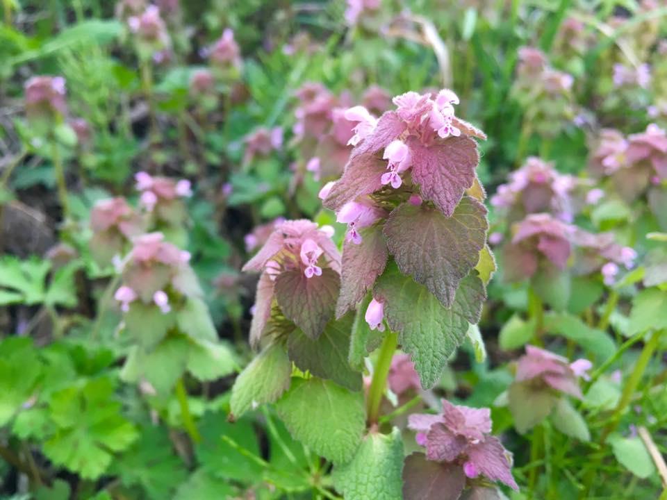 風薫る5月♪たんぽぽや雑草の花にも癒されて。ー新緑のメロディーー
