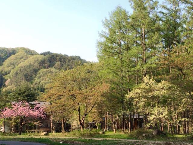 お散歩で山野草を見つけるー米沢・旬の楽しみー