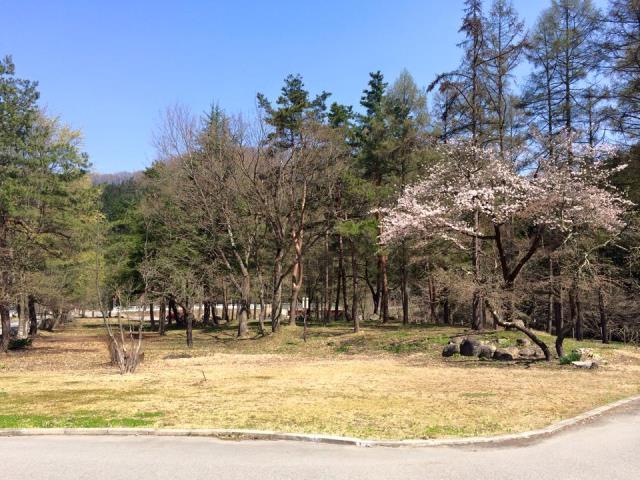 4月22日の桜 咲き始め