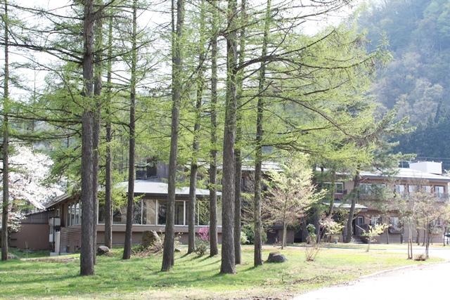 椿も 水仙も 梅も 桜も つつじも一斉に満開です。ー米沢の春2015ー夏みたいだけど。