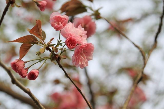百花斉放 春らんまん♪ーすみれガーデンの花たちー