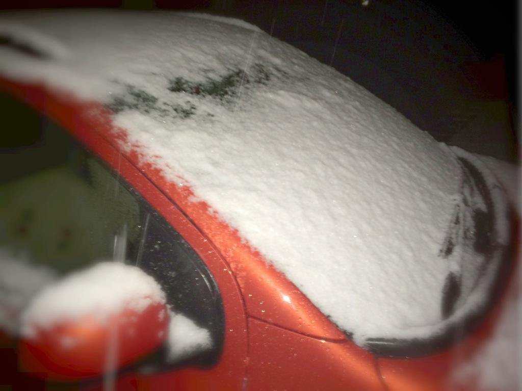 すみれにも初雪♪ 雪、降りました!