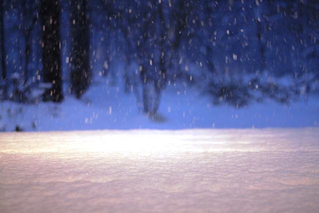 雪を 愉しんでいます♪