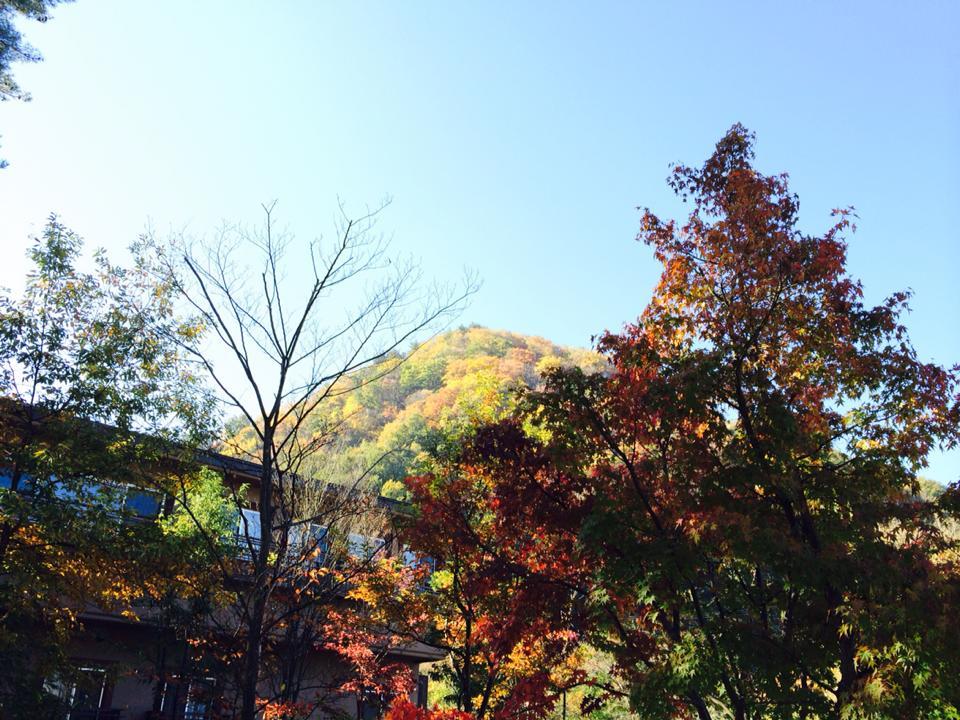 すみれガーデン と カウンターキッチンの 秋の彩り♪