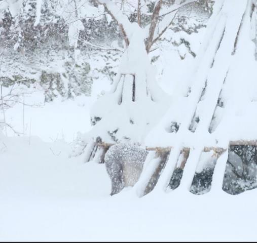 雪の米沢温泉旅行に 冬のカモシカの思い出♪