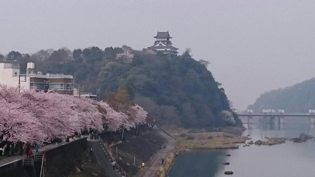 国宝犬山城の桜の便りーお客さまのメールよりー